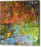 Leaves Of All Colors Acrylic Print