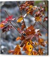 Leaves Of Fall  Acrylic Print
