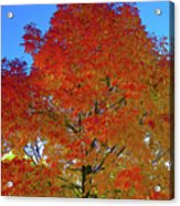 Leaves Of Fire Acrylic Print