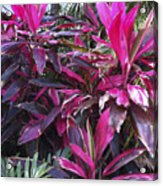 Leaves Of Pink Acrylic Print