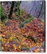 Leaves Of The Forest Acrylic Print