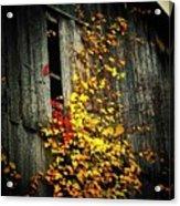 Leaves On An Old Barn Acrylic Print