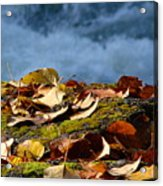 Leaves On Rock By River Acrylic Print