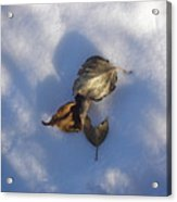 Leaves On Snow Acrylic Print