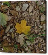 Leaves On The Rocks Acrylic Print