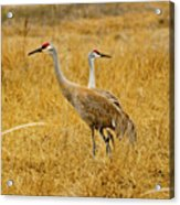 Left Or Right Acrylic Print