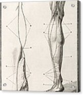 Leg Nerve, 18th Century Illustration Acrylic Print