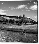Legend Of The Bear Wyoming Devils Tower Panorama Bw Acrylic Print