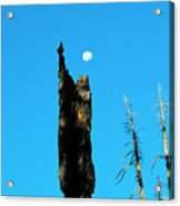 Lei Wang 07 Acrylic Print