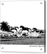 Lely Horses Acrylic Print