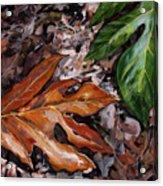 Lemai Leaves Acrylic Print