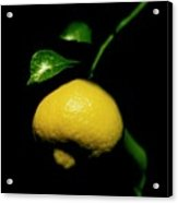 Lemon With Leaves Acrylic Print