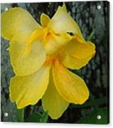 Lemon Yellow Acrylic Print