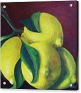 Lemons Acrylic Print by Dana Redfern
