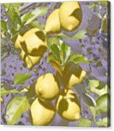 Lemons Purple Pastel Acrylic Print