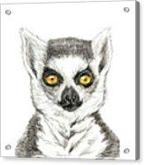 Lemur Acrylic Print