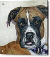 Lennox Acrylic Print