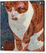 Leo The Cat Acrylic Print