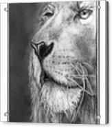 Leo The King Acrylic Print