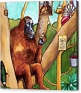 Leonardo The Orangutan Acrylic Print