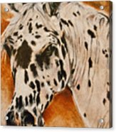 Leopard Appy Acrylic Print