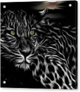 Leopard At Night Acrylic Print