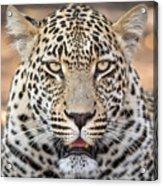 Leopard Close Up Acrylic Print