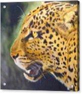 Leopard Acrylic Print by Crispin  Delgado
