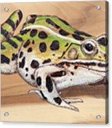 Leopard Frog No 1 Acrylic Print