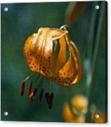 Leopard Lilly Acrylic Print