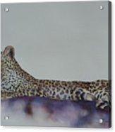 Leopard On Rock Acrylic Print
