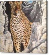 Leopard On The Rocks Acrylic Print