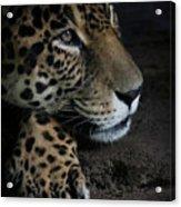 Leopard Print Acrylic Print