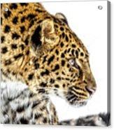 Leopard Profile Acrylic Print