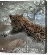 Leopard Tree Hugger Photo Collage Acrylic Print