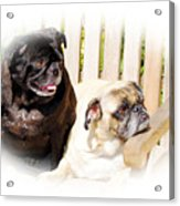 Leroy And Mrs. Jones Acrylic Print