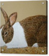 Les's Rabbit Acrylic Print