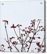 Lesser Yellownape Woodpecker Acrylic Print
