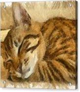 Let Sleeping Cats Lie Acrylic Print