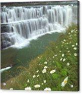 Letchworth Falls Sp Lower Falls Daisies Acrylic Print