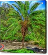 Leu Gardens Palm Acrylic Print