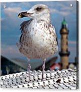 Liberty Of An Pacific Gull Acrylic Print