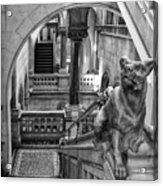 Library Dog Acrylic Print