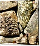 Lichen And Moss Acrylic Print