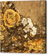 Lichen On The Piran Walls Acrylic Print