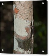 Lichen On The Trees At The Coba Ruins  Acrylic Print