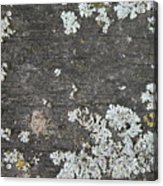 Lichen On Wood Acrylic Print