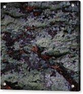 Lichen Texture Acrylic Print