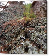 Lichen Tower Acrylic Print