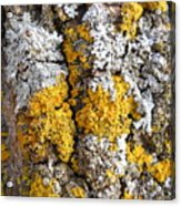Lichens On Tree Bark Acrylic Print